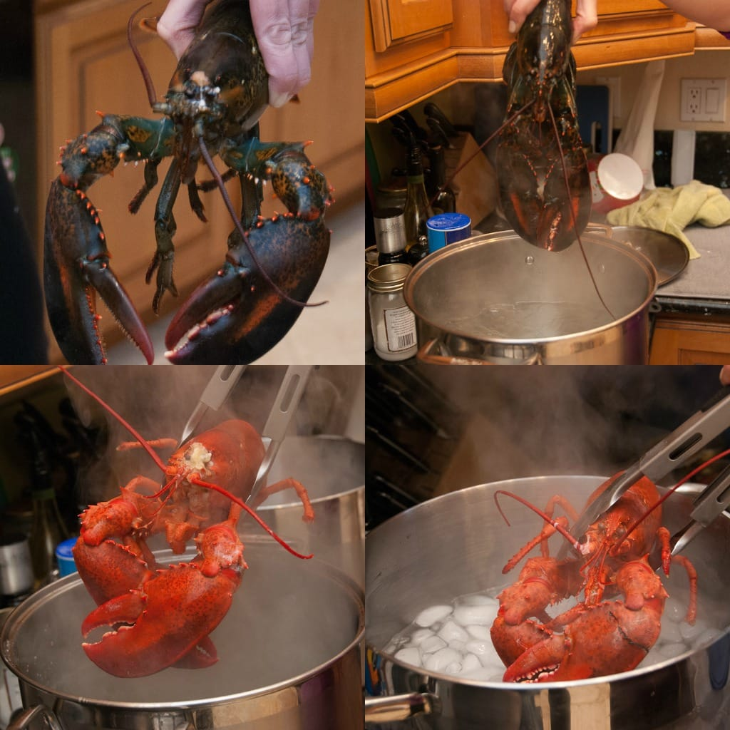 lobster collage 2