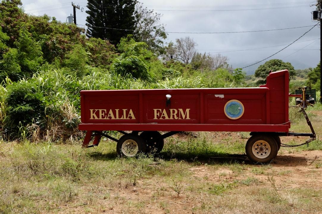 Tasting Kauai Part One - Kealia Farm Tour www.pineappleandcoconut.com #ad #tastingkauai