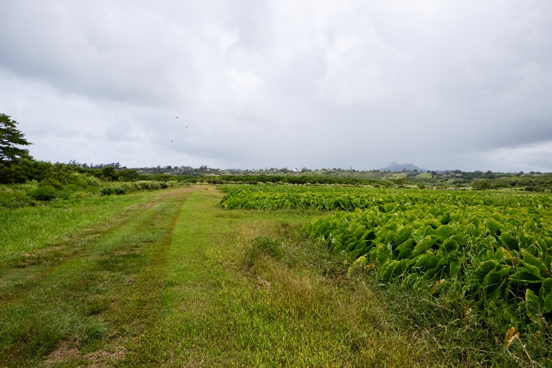 Tasting Kauai Part One - Kealia Farm Tour www.pineappleandcoconut.com #ad #tastingkauai